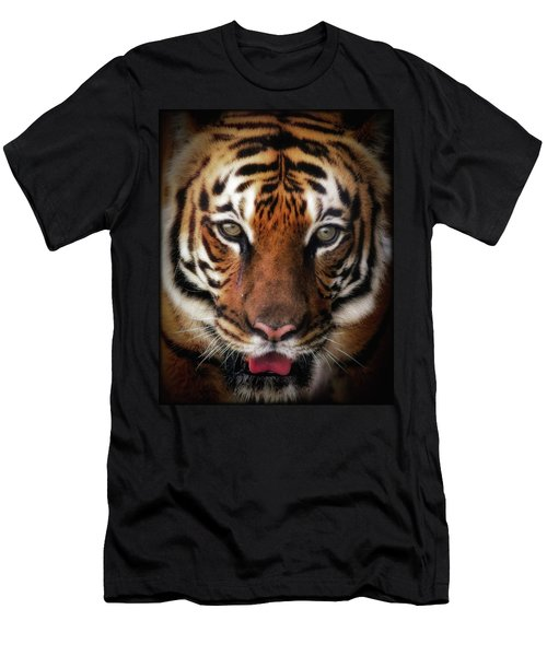 Big Cat Stare Down Men's T-Shirt (Athletic Fit)