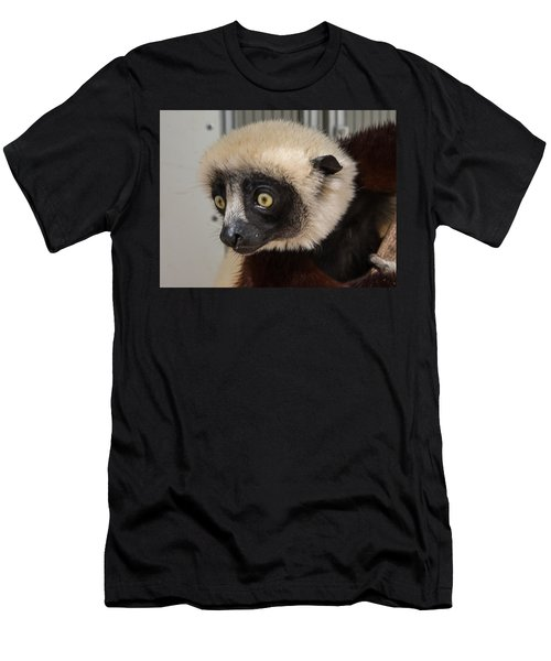 A Very Curious Sifaka Men's T-Shirt (Athletic Fit)