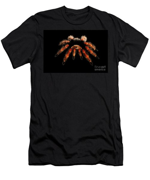Men's T-Shirt (Athletic Fit) featuring the photograph Big Hairy Tarantula Theraphosidae Isolated On Black Background by Sergey Taran