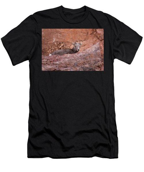 Bighorn Lamb1 Men's T-Shirt (Athletic Fit)