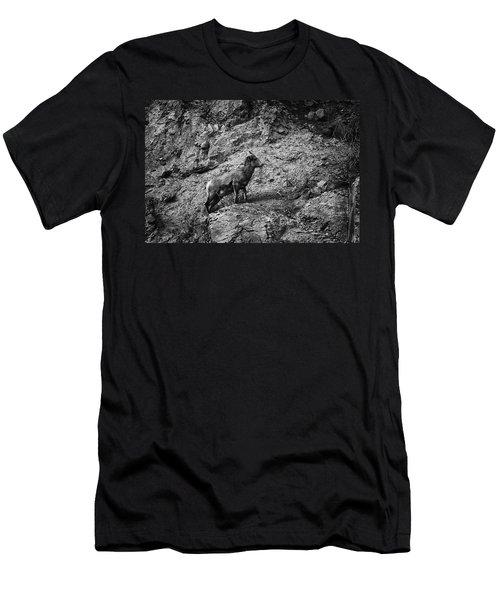 Bighorn Sheep Ewe On Wolf Creek Pass Men's T-Shirt (Athletic Fit)