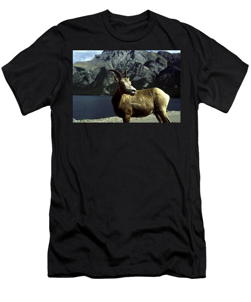 Men's T-Shirt (Slim Fit) featuring the photograph Bighorn Sheep by Sally Weigand