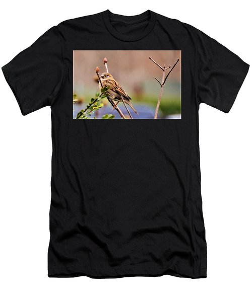 Bird In The Cold Men's T-Shirt (Athletic Fit)