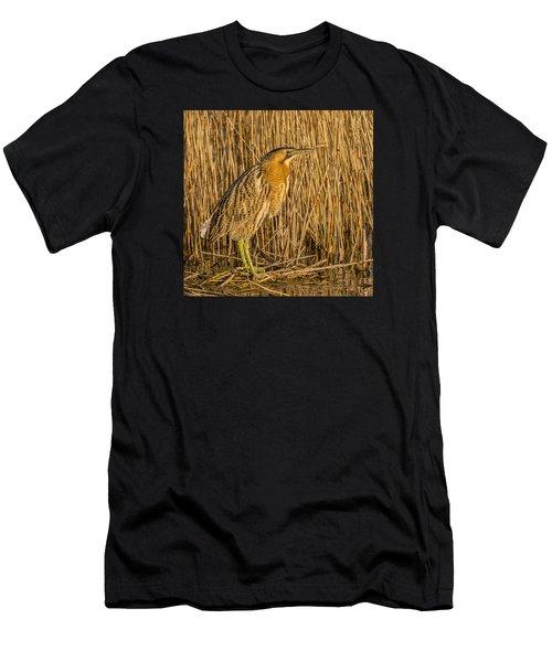 Bittern Botaurus Stellaris Men's T-Shirt (Athletic Fit)