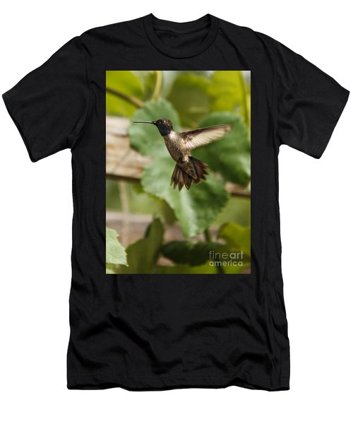 Black-chinned Hummingbird Men's T-Shirt (Athletic Fit)
