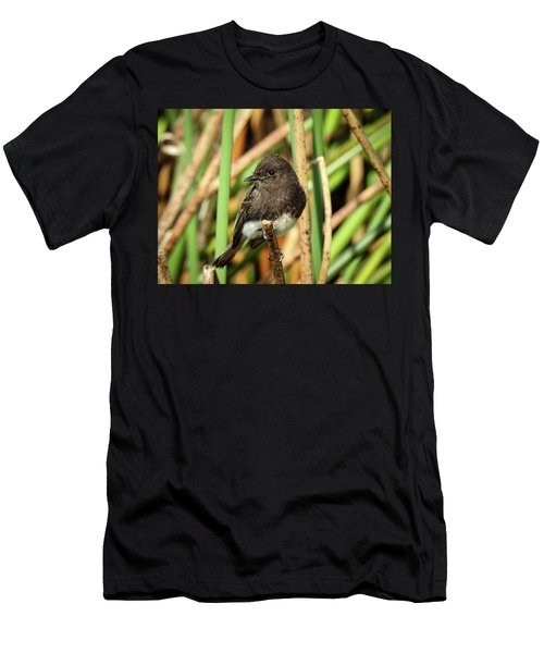 Black Phoebe Close Up Men's T-Shirt (Athletic Fit)