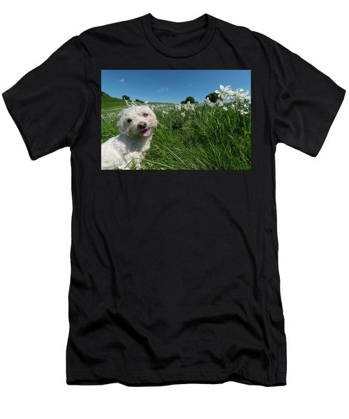 Blooming Daffodils In The Antola Park With Maltese II Men's T-Shirt (Athletic Fit)