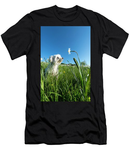 Blooming Daffodils In The Antola Park With Maltese IIi Men's T-Shirt (Athletic Fit)