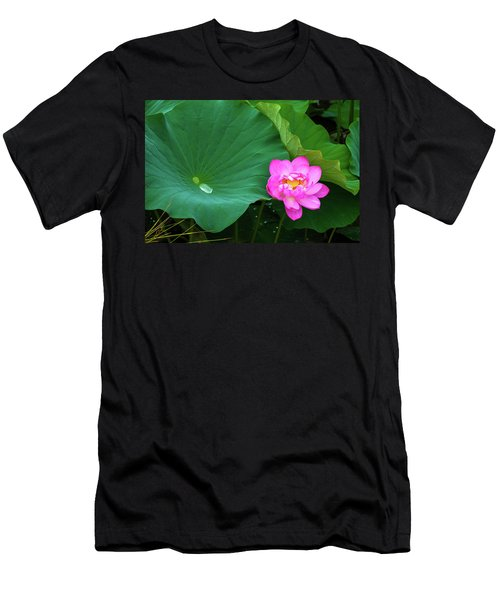 Blooming Pink And Yellow Lotus Lily Men's T-Shirt (Athletic Fit)