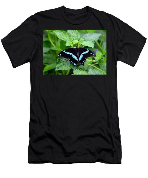 Blue Banded Swallowtail Butterfly Men's T-Shirt (Athletic Fit)