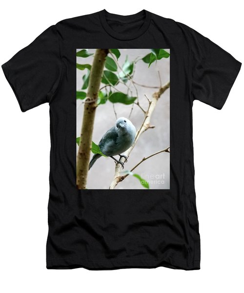 Blue-grey Tanager Men's T-Shirt (Athletic Fit)