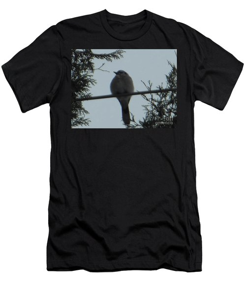 Blue Jay On Wire Men's T-Shirt (Athletic Fit)