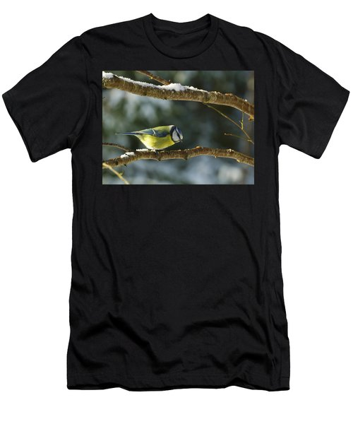 Blue Tit Men's T-Shirt (Athletic Fit)