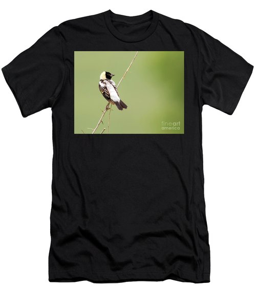 Bobolink Looking At You Men's T-Shirt (Athletic Fit)