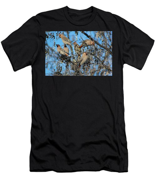 Bohemian Waxwings Men's T-Shirt (Athletic Fit)