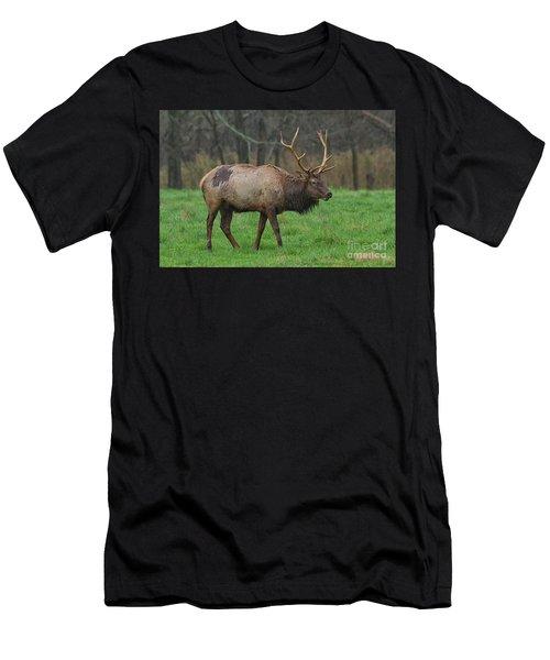 Boxley Elk Men's T-Shirt (Athletic Fit)
