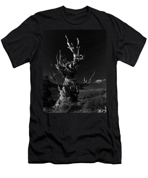 Bristlecone Pine Men's T-Shirt (Slim Fit) by Art Shimamura