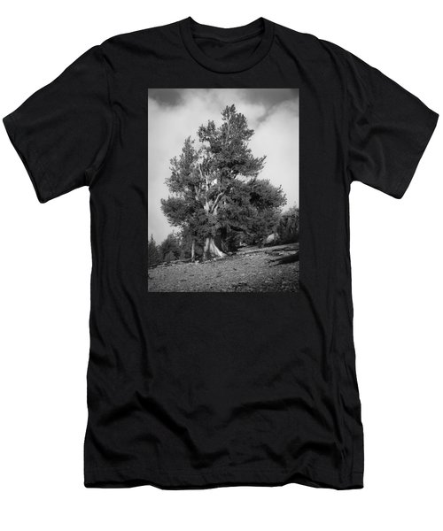 Bristlecone Pine Men's T-Shirt (Athletic Fit)