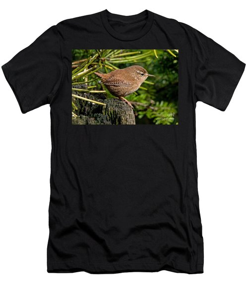 British Wren Men's T-Shirt (Athletic Fit)