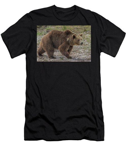 Brown Bear 6 Men's T-Shirt (Athletic Fit)