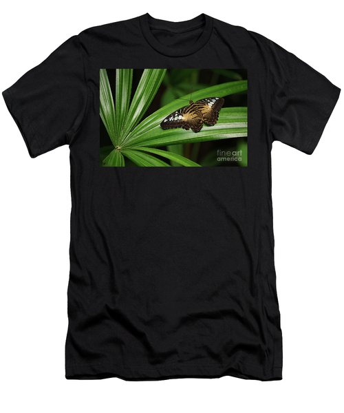 Brown Clipper Butterfly -parthenos Sylvia- On Frond Men's T-Shirt (Athletic Fit)