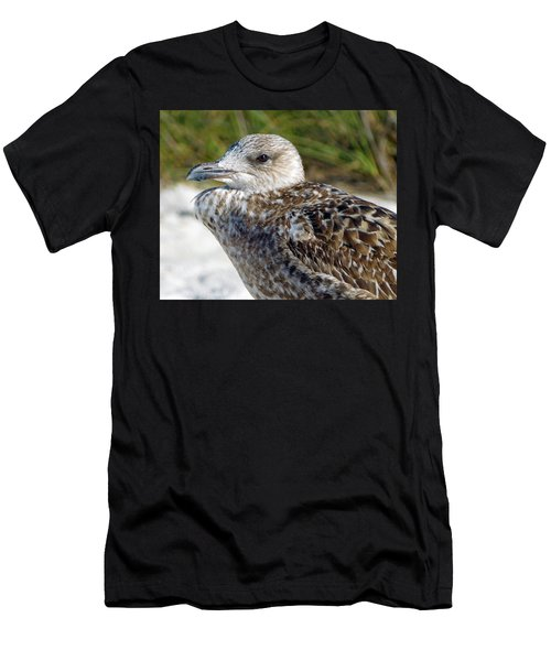 Brown Gull At Wiggins Pass Men's T-Shirt (Athletic Fit)