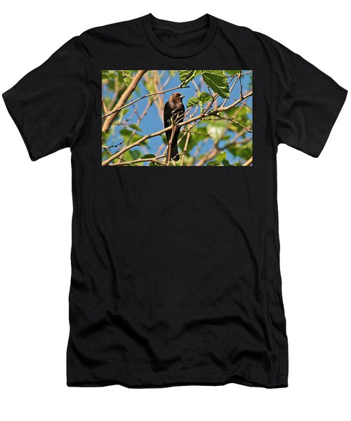 Brown-headed Cowbird Men's T-Shirt (Athletic Fit)