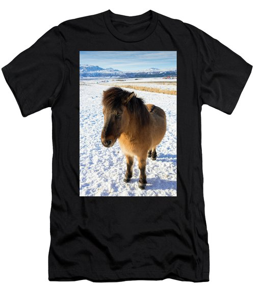 Men's T-Shirt (Slim Fit) featuring the photograph Brown Icelandic Horse In Winter In Iceland by Matthias Hauser