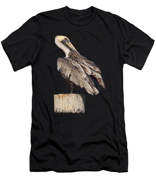Brown Pelican - Preening - Transparent Men's T-Shirt (Athletic Fit)