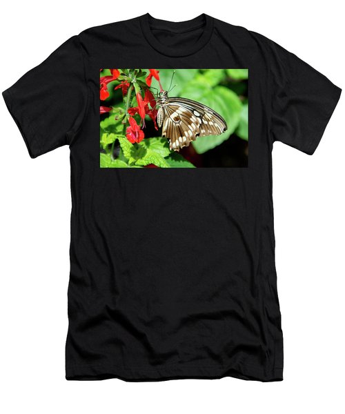 Brown Swallowtail Butterfly Men's T-Shirt (Athletic Fit)