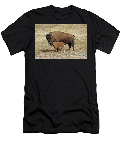 Buffalo With Newborn Calf Men's T-Shirt (Athletic Fit)
