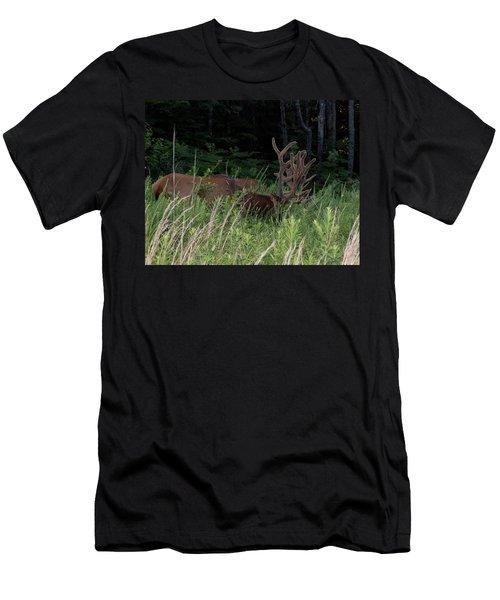 Bull Elk Grazing Men's T-Shirt (Athletic Fit)