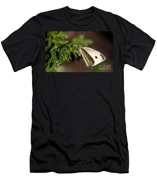 Cabbage Butterfly On Evergreen Bush Men's T-Shirt (Athletic Fit)