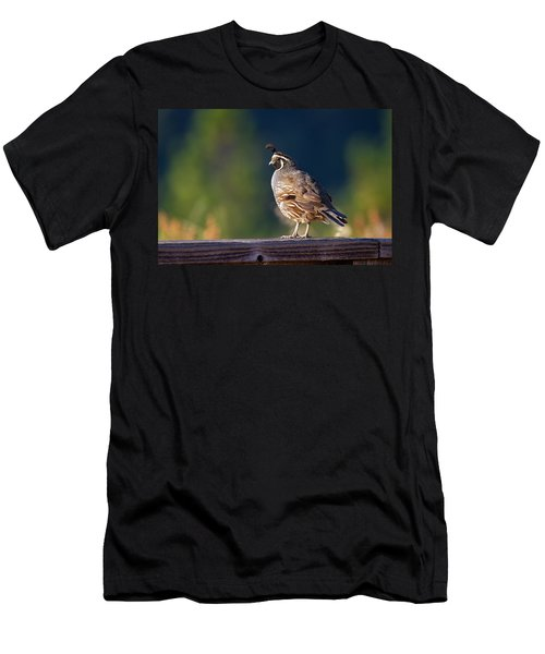 California Quail Men's T-Shirt (Athletic Fit)