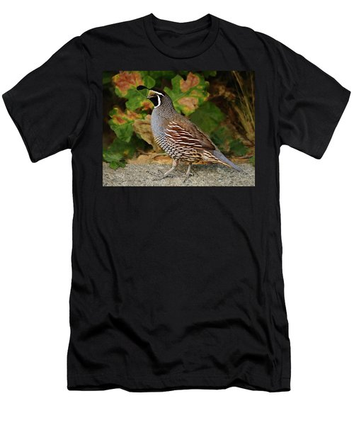 California Quail Rooster Men's T-Shirt (Athletic Fit)