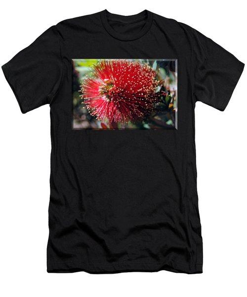 Callistemon - Bottle Brush T-shirt 5 Men's T-Shirt (Athletic Fit)