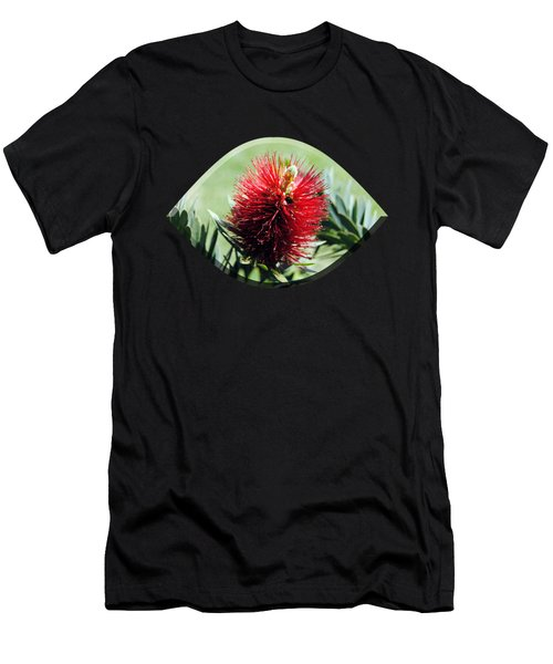 Callistemon - Bottle Brush T-shirt 7 Men's T-Shirt (Athletic Fit)