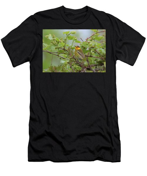 Cape May Warbler Men's T-Shirt (Athletic Fit)