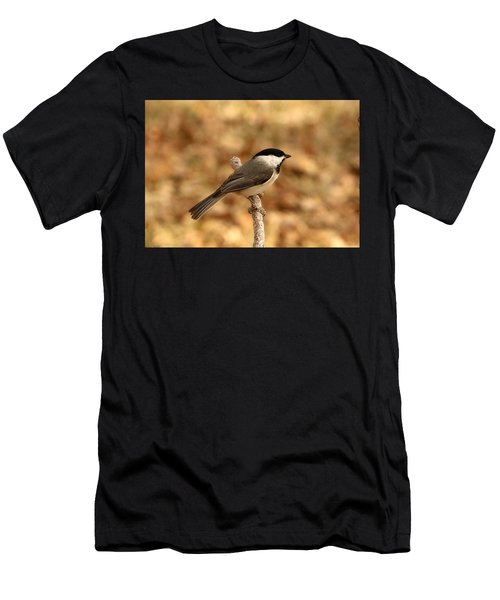 Carolina Chickadee On Branch Men's T-Shirt (Athletic Fit)