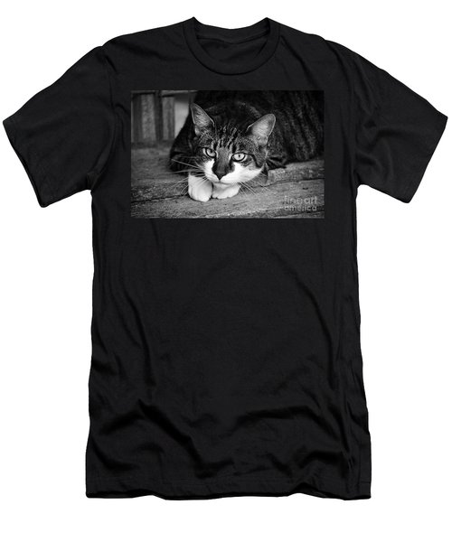 Cat Naps 2 Men's T-Shirt (Athletic Fit)