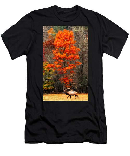 Cataloochee Color Men's T-Shirt (Athletic Fit)