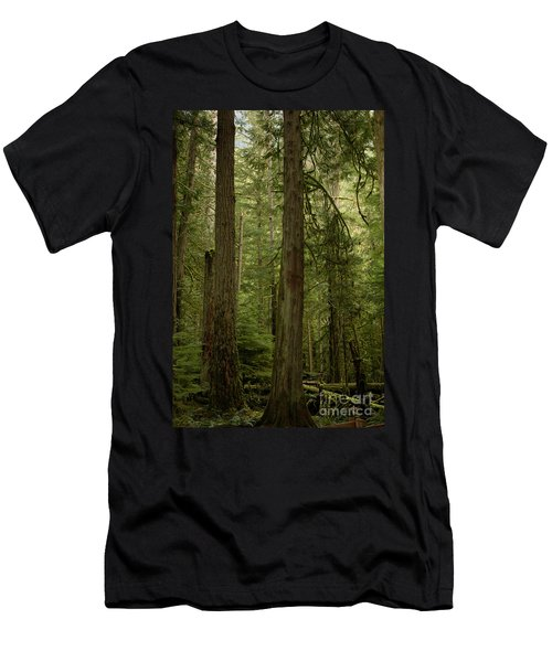 Cathedral Grove Men's T-Shirt (Athletic Fit)