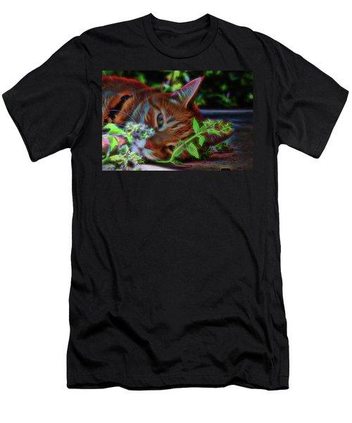 Catnip Chillin Men's T-Shirt (Athletic Fit)