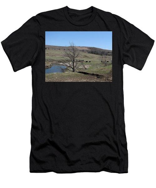 Cattle Along Deep Creek Men's T-Shirt (Athletic Fit)