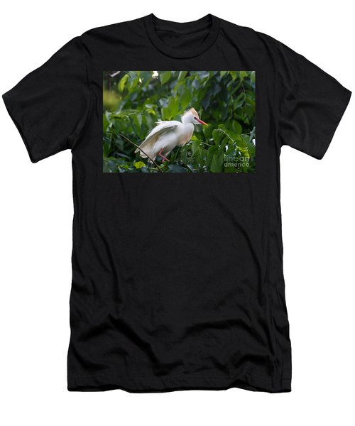 Cattle Egret At Rest Men's T-Shirt (Athletic Fit)