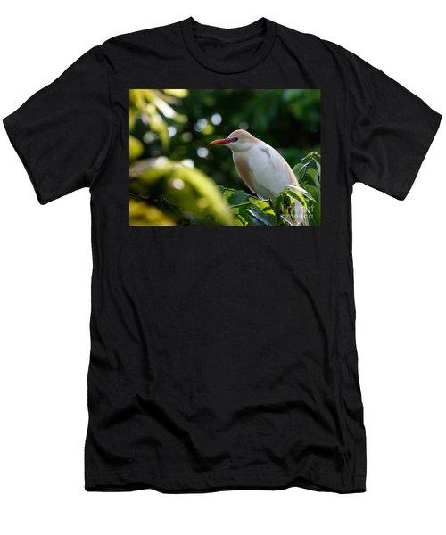 Cattle Egret In Oklahoma Men's T-Shirt (Slim Fit)