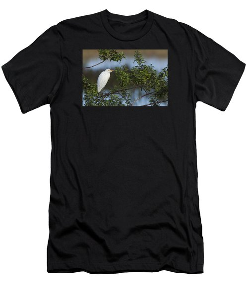 Cattle Egret In The Morning Light Men's T-Shirt (Athletic Fit)