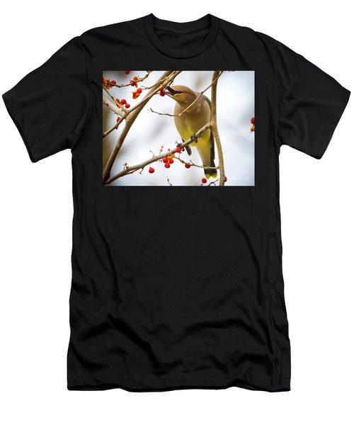 Cedar Waxwing Feeding  Men's T-Shirt (Athletic Fit)