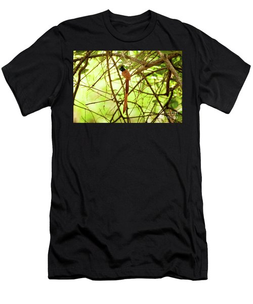 Ceylon Paradise Flycatcher Men's T-Shirt (Athletic Fit)