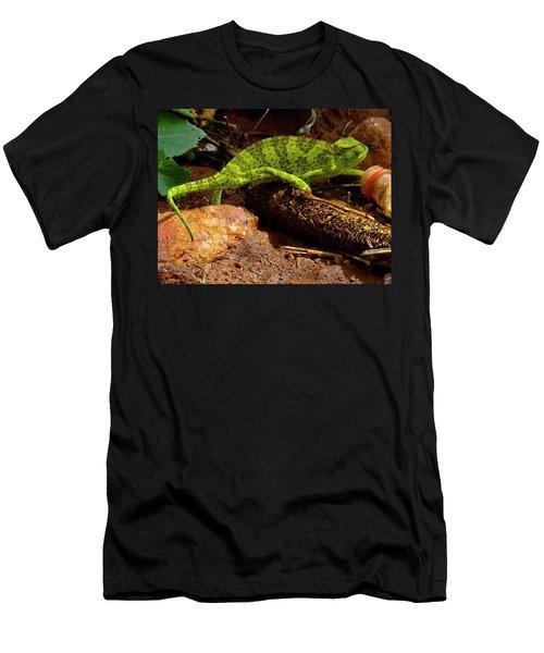 Chameleon Struts His Stuff Men's T-Shirt (Slim Fit) by Exploramum Exploramum
